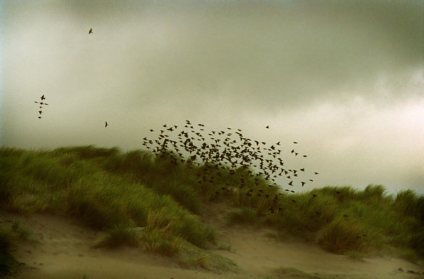 """the Sunday morning one Achill starling skipped out of the sermon"""