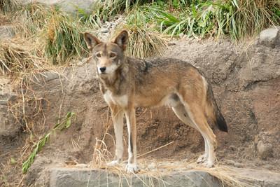 Defiance Zoo 09-22-2012-36