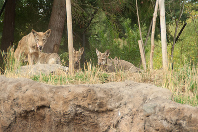 Defiance Zoo 09-22-2012-53