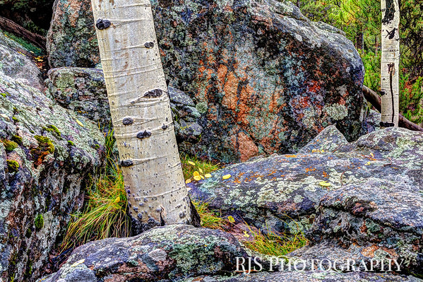 Colors and Textures