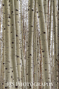Kenosha Aspen in Winter