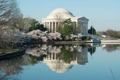cherryblossoms-0539