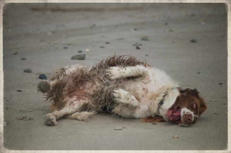 Abbie at the beach