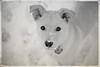 Lucky's first snowfall