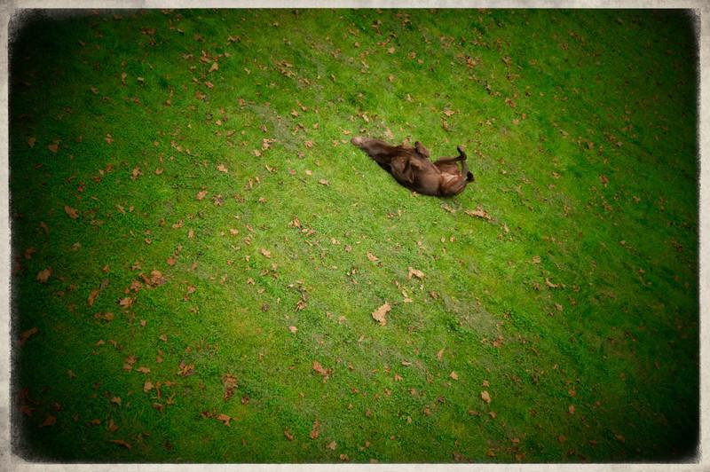 Celia in the grass