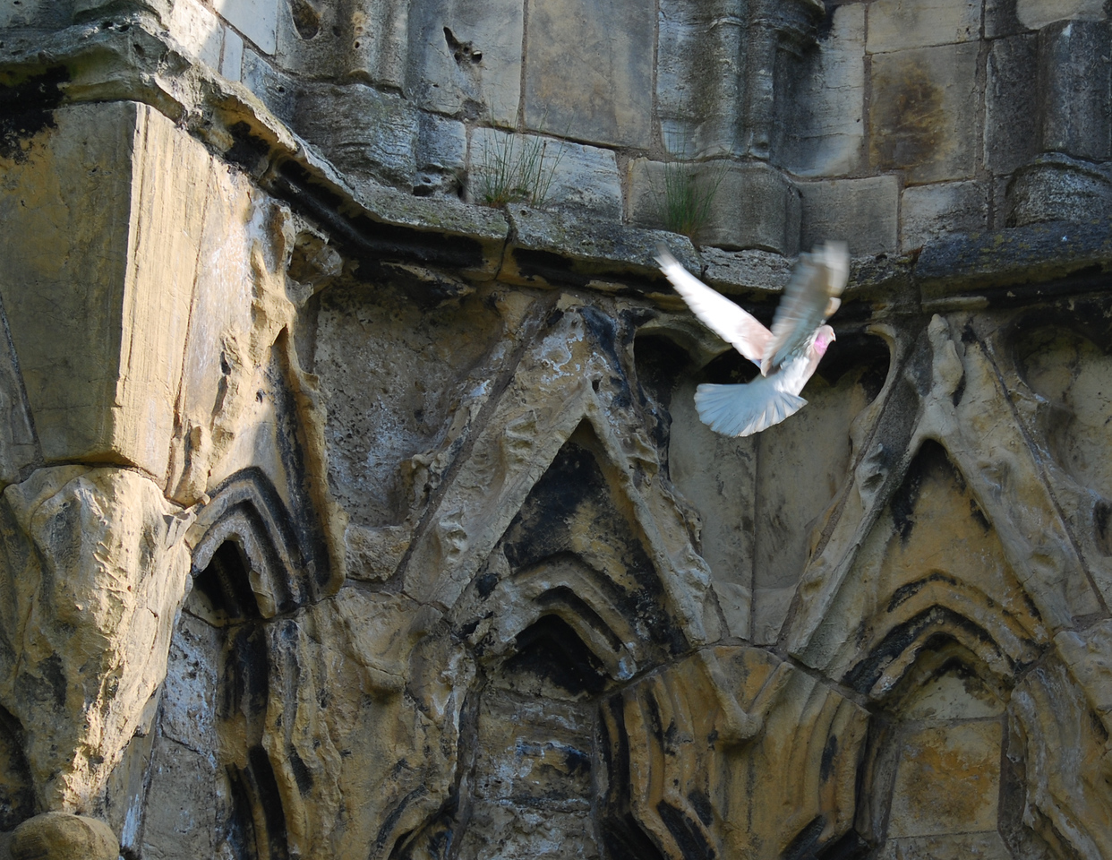 """May<br /> <br /> """"Ascension""""<br /> St. Mary's Abbey<br /> York, England"""