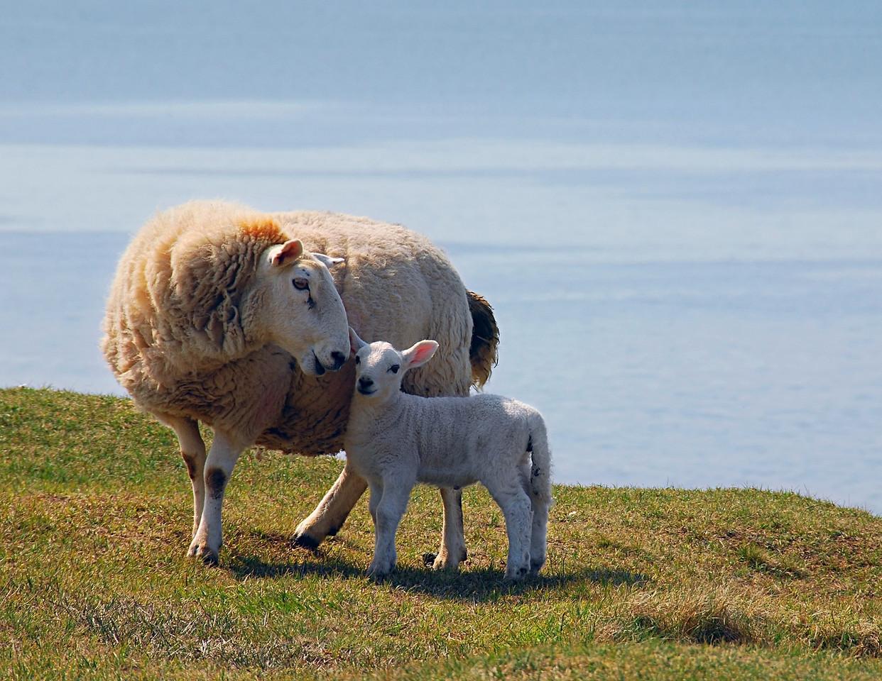 "November<br /> <br /> ""Secrets""<br /> Isle of Skye, Scotland"