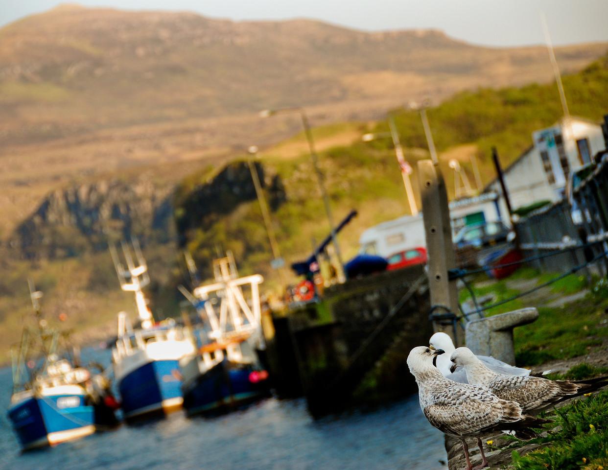 "October<br /> <br /> ""Longshoremen""<br /> Portree Harbor<br /> Isle of Skye, Scotland"