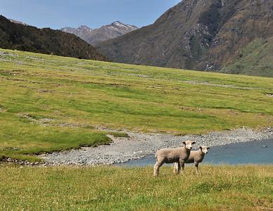 Lambs Matukituki River, New Zealand