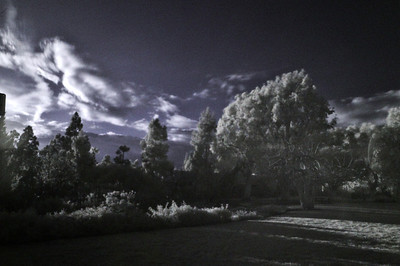 "Taken in my neighborhood park using a 850 nm infrared filter and converted to ""false color"" using the standard blue/red channel swap."