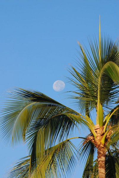 moon over palm tree