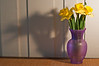 daffodils, f/11 aperture ring