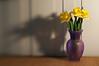 daffodils, f/4 aperture ring