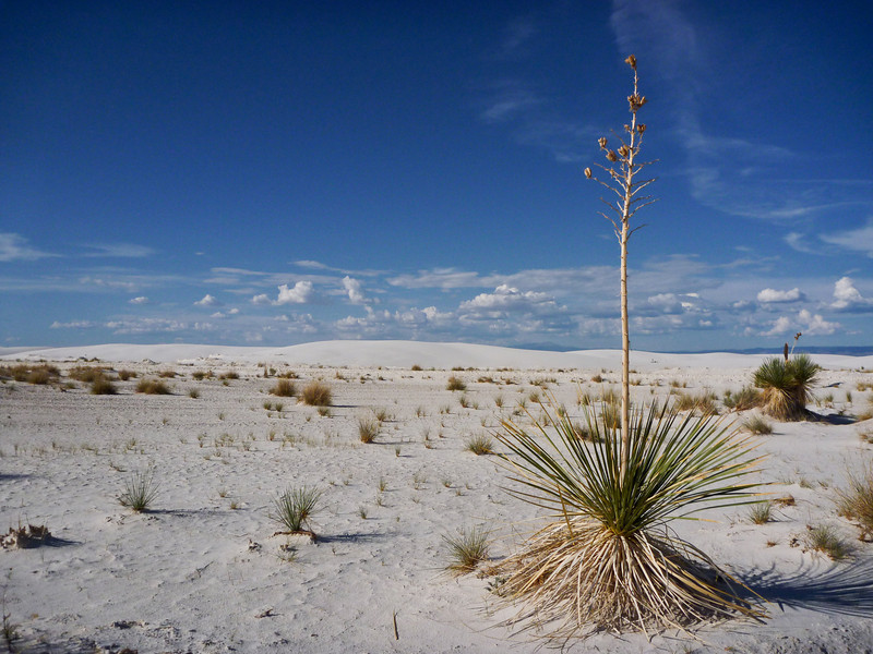 Yucca plants were some of the more common ones in the area.