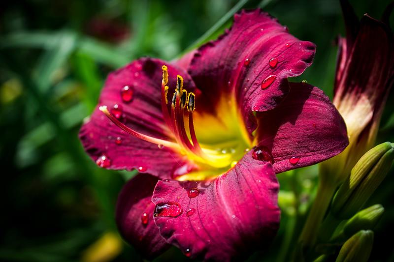 Monicas Flower