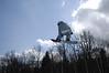 kleinpix_2008-03-24_16765