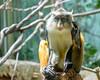 2017-05 Bronx Zoo 0051
