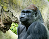 2017-05 Bronx Zoo 0227