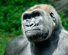 2017-05 Bronx Zoo 0105