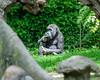 2017-05 Bronx Zoo 0193
