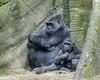 2017-05 Bronx Zoo 0164