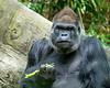 2017-05 Bronx Zoo 0219