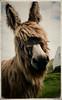 right handsome donkey