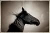 Johnny Cash's horse