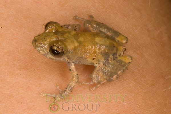 [RAEI_PaulSHamilton_IMGP5011] Jatun Sacha Biological Station, Napo Province, Ecuador