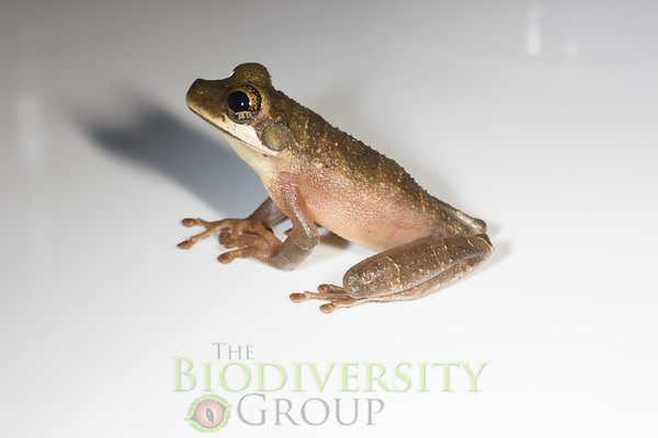 Biodiversity Group, _MG_2094