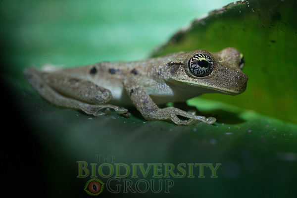 Biodiversity Group, _DSC2135