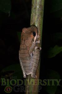 Biodiversity Group, _DSC9750