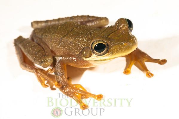 Biodiversity Group, _DSC8919