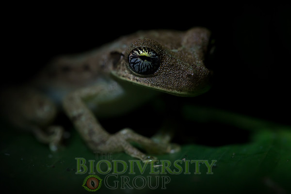 Biodiversity Group, _DSC2144