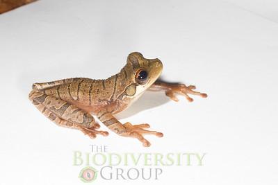 Biodiversity Group, _MG_1227