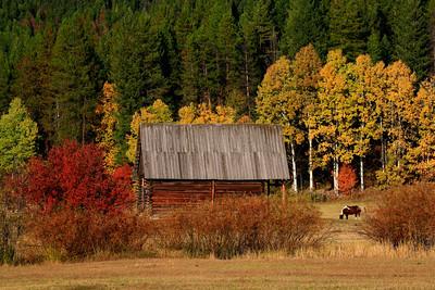 Fall Barn - Montana