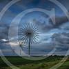 Windmill Wild Flowers