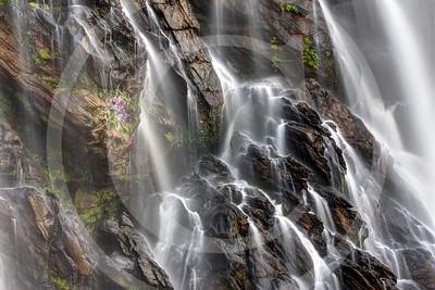 Purple Flowers by the Waterfall