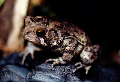 frogger3-1