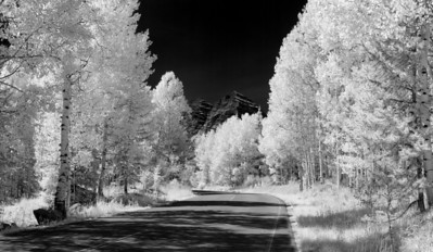 """""""Aspen Road""""  Maroon Bells National Recreation Area, CO  I really love how infrared light changes the dynamics of a scene.  Plants glow bright white, and non reflective sources turn black.  This creates a beautiful contrast in a scene.  I converted this to Black and White, as I feel it works well with an infrared scene.  Technical Details: Shot with an IR modified Canon 10D and Canon 50mm lens at F22, 1/60  seconds and ISO 100.  Mosaic image created from 15 source images."""