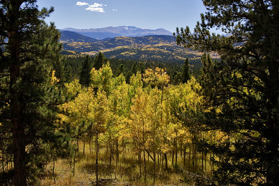 """Colorado Colors""  Colorado  There is no place I would rather be in the Fall than Colorado.  Acres of hill and mountainside burn witih color as the Aspen trees turn their leaves.  It literally takes your breath way to see it. Technical Details: Shot with a Canon 5dMk2 and 20mm lens."
