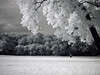 A child flies his kite in Bob Woodruff Park in Plano, Texas in this infrared image.