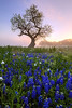 """""""Pastel Morning"""" <BR><BR> Central Texas<BR><BR> Spring in Texas is like no other.  The landscape is transformed by wildflowers for a few short weeks.  On this morning I was fortunate to be able to also have fog as the sun came out.<BR><BR> Technical Details: Shot with Canon 5d MK2 and Canon 24-70mmlens at F10 and 1.3 seconds. <BR><BR> <br><center><a href=""""javascript:addCartSingle(ImageID, ImageKey)""""><img src=""""/photos/604338366_ecXJp-M.gif"""" border=""""0""""></a></center>"""