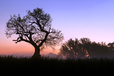 """Early Morning Colors""  Prairie Mountain, TX On this particular morning the fog lifted just enough to allow the sunrise to filter through and create some incredible pastel scenery. Technical Details: Shot with Canon 5d MK2 and Canon 24-70mm lens."