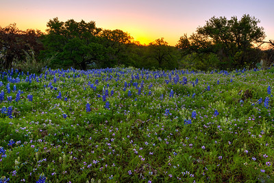 """""""Willow City Loop""""  Central TX In the early Spring in the Central Texas Hill Country the countryside comes alive with color due to the annual Bluebonnet bloom.  Fields become carpets of green dotted with purple, red and yellow flowers. Technical Details: Shot with Canon 5d MK2 and Canon 24-70mm lens."""