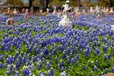 """Remebering""  Fredericksburg, TX In the early spring the Texas Hill Country comes alive with color as the annual bluebonnet bloom occurs.  This particular location is a small cemetary on the outskirts of Fredericksburg.  Bluebonnets carpet the old markers and graves, some of which are over 100 years old. Technical Details: Shot with Canon 5d MK2 and Canon 10-22mm lens.    Panorama created from 5 bracketted horizontal shots."