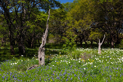 """""""Old Bones""""  Central TX In the early Spring in the Central Texas Hill Country the countryside comes alive with color due to the annual Bluebonnet bloom.  Fields become carpets of green dotted with purple, red and yellow flowers. Technical Details: Shot with Canon 5d MK2 and Canon 24-70mm lens."""