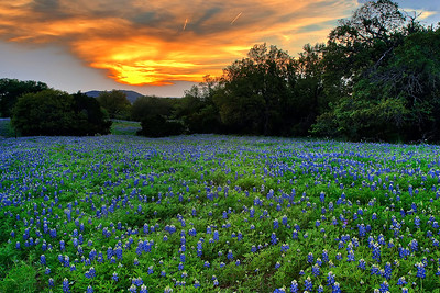 """""""Bluebonnet Sunset""""  Willow City Loop, TX Technical Details: Shot with Canon 5d MK2 and Canon 10-22mm lens."""