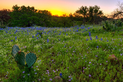 """Willow City Loop""  Central TX In the early Spring in the Central Texas Hill Country the countryside comes alive with color due to the annual Bluebonnet bloom.  Fields become carpets of green dotted with purple, red and yellow flowers. Technical Details: Shot with Canon 5d MK2 and Canon 24-70mm lens."