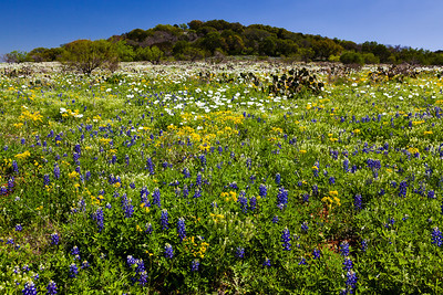 """""""Texas Hill Country""""  Central TX In the early Spring in the Central Texas Hill Country the countryside comes alive with color due to the annual Bluebonnet bloom.  Fields become carpets of green dotted with purple, red and yellow flowers. Technical Details: Shot with Canon 5d MK2 and Canon 24-70mm lens."""